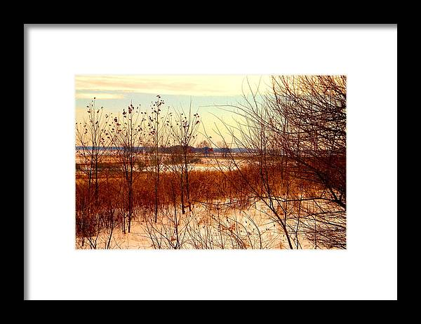 Winter Framed Print featuring the photograph Late Winter at Emiquon by Helen ONeal