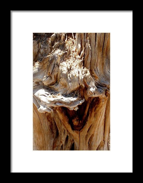 Tree Framed Print featuring the photograph Laughing Tree by Wayne Potrafka