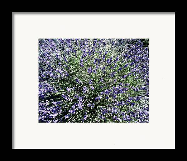 Flowers Framed Print featuring the photograph Lavender 2 by Valerie Josi