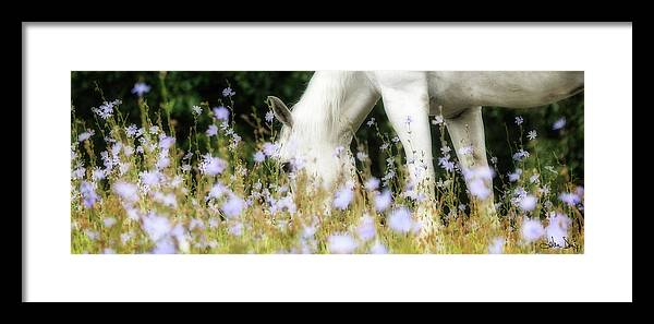 Flatlandsfoto Framed Print featuring the photograph Lavender Dreams by Joan Davis