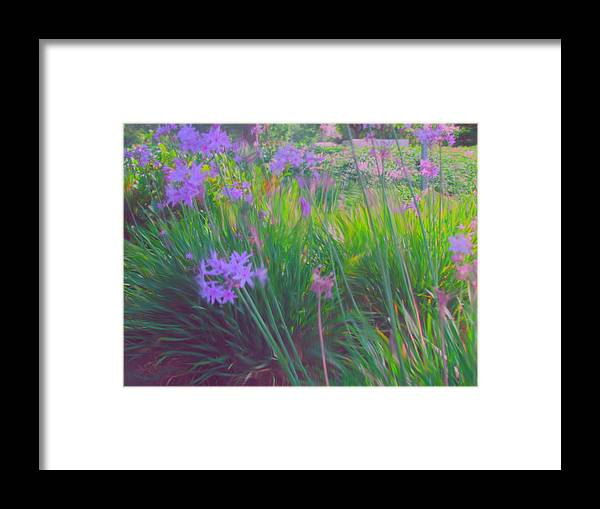 Flowers Framed Print featuring the painting Lavender Field by Maribel McIntosh