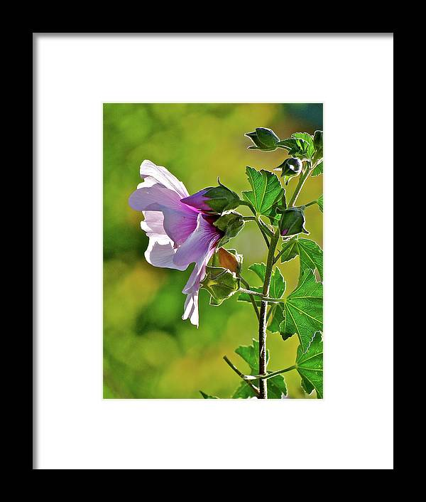Flower Framed Print featuring the photograph Lavender Flower In The Sun by Liz Vernand