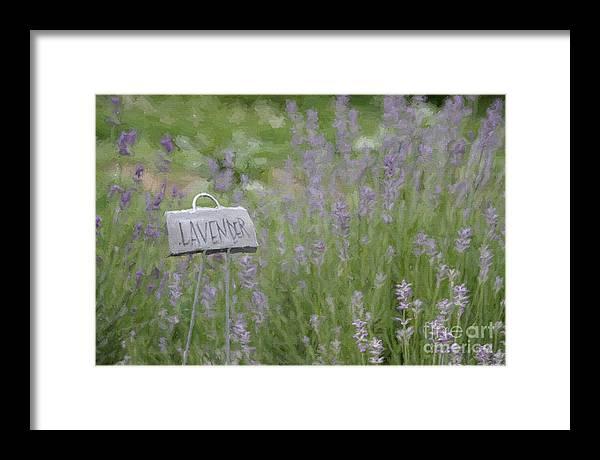 Lavender by Jayne Carney