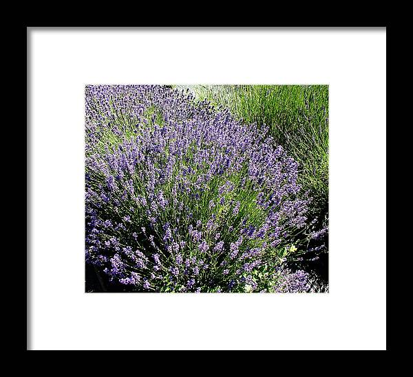 Flowers Framed Print featuring the photograph Lavender by Valerie Josi