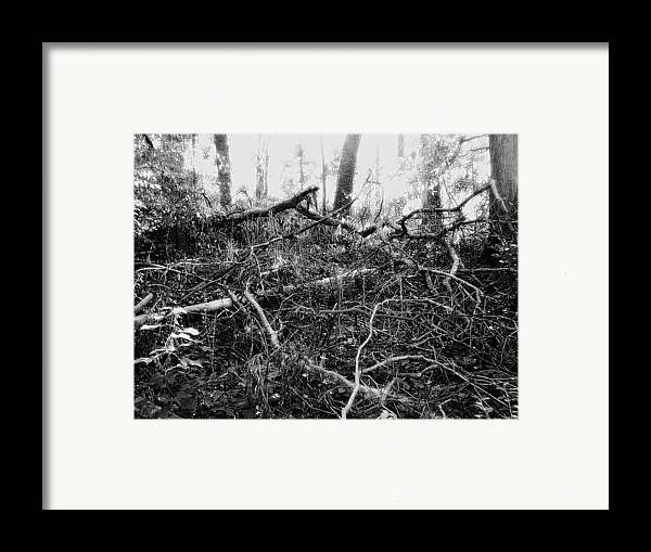 Trees Framed Print featuring the photograph Layers Of Time Passed by Scarlett Royal
