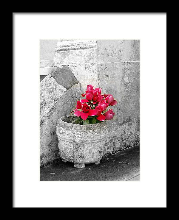 Flowers Framed Print featuring the photograph Layfayette No One Red Roses by Heather S Huston