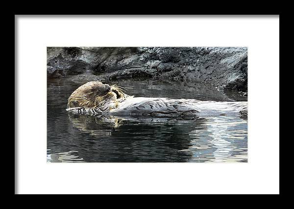 Aquarium Framed Print featuring the photograph Lazy Day by Larry Keahey