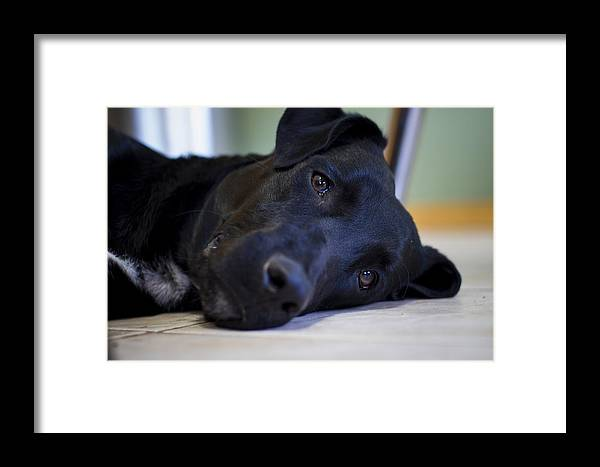 Framed Print featuring the photograph Lazy Eyes by Christa Holmans