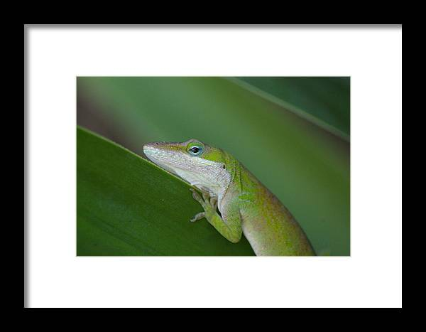 Animal Framed Print featuring the photograph Lazy Green Day by Don Prioleau