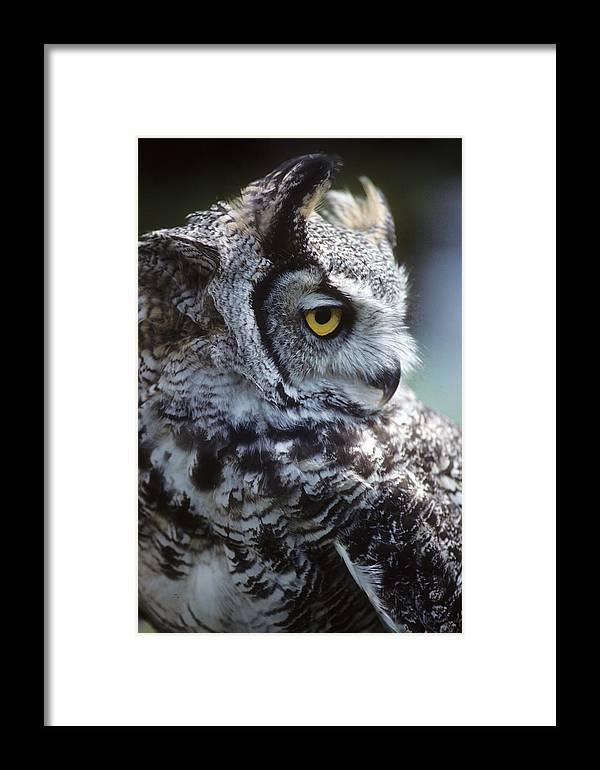 Sleepy Framed Print featuring the photograph Lazy Owl by Carl Purcell