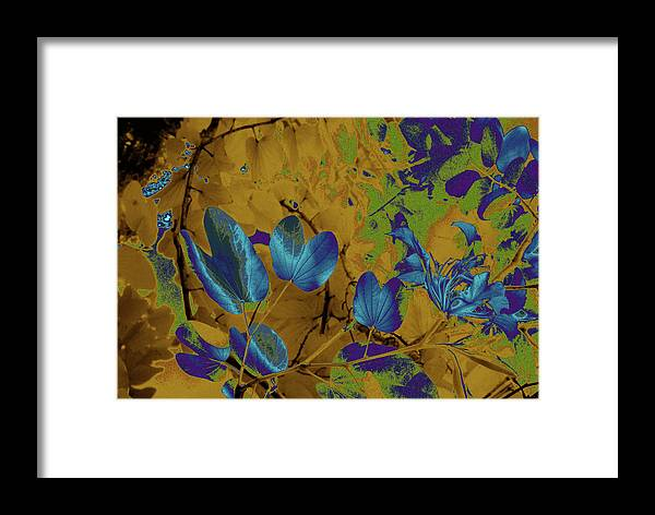 Trees Framed Print featuring the photograph Leaf And Flower 10 by Gary Bartoloni