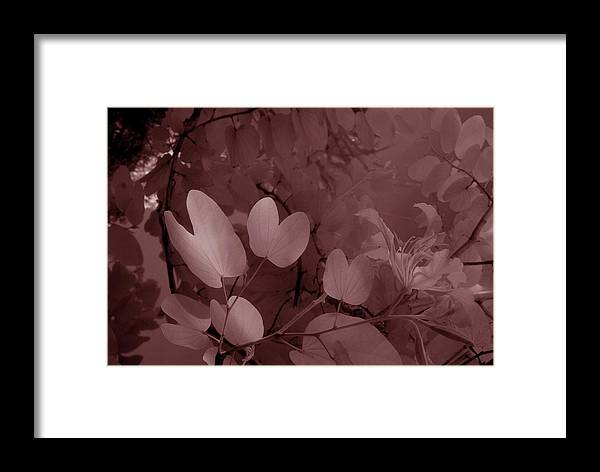 Trees Framed Print featuring the photograph Leaf And Flower 2 by Gary Bartoloni