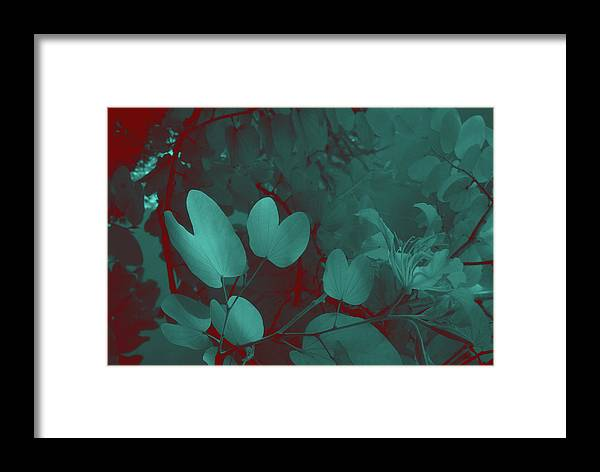 Trees Framed Print featuring the photograph Leaf And Flower 3 by Gary Bartoloni
