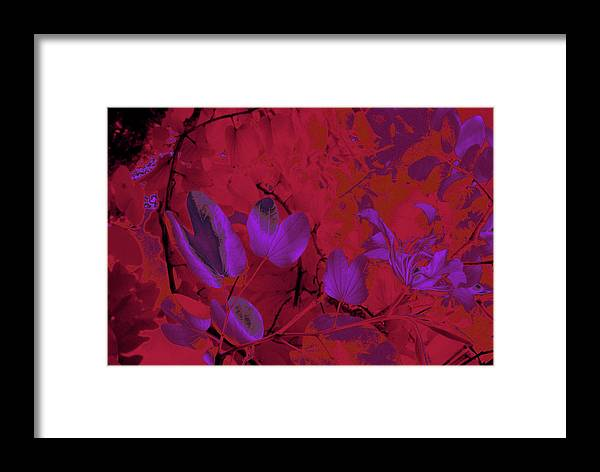 Trees Framed Print featuring the photograph Leaf And Flower 9 by Gary Bartoloni