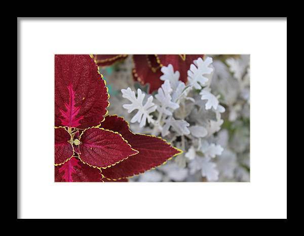 Leaf Framed Print featuring the photograph Leaf by Arundhati Shenoy