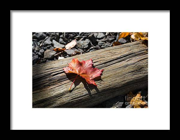 Autumn Framed Print featuring the photograph Leaf by Corey Templeton