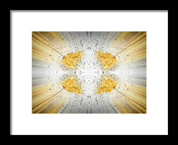 Leaves Framed Print featuring the photograph Leaf Explosion by Monnie Ryan