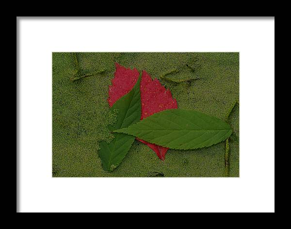 Leave Framed Print featuring the photograph Leaf In The Swamp by Andreas Freund