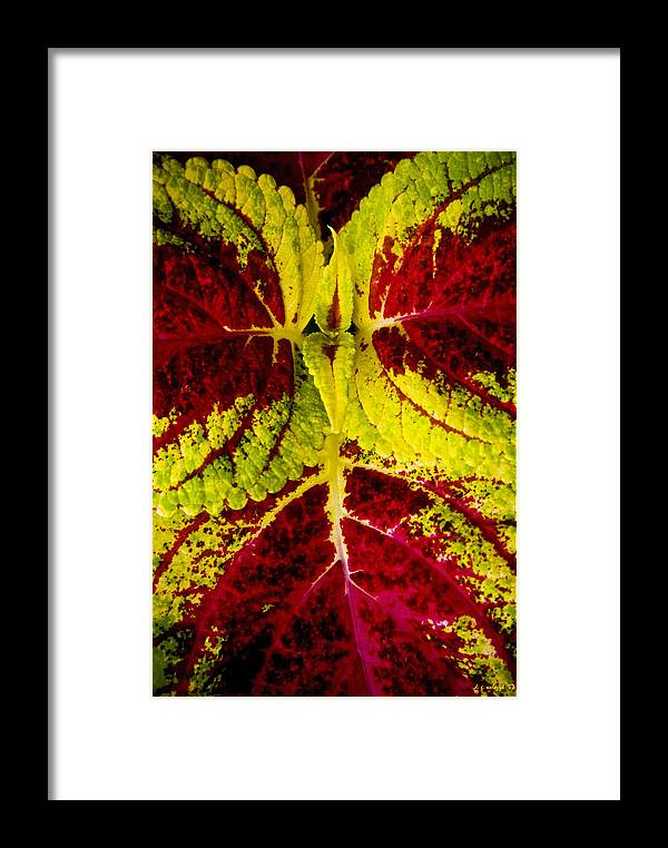 Flora Framed Print featuring the photograph Leaf Study by Daniel G Walczyk