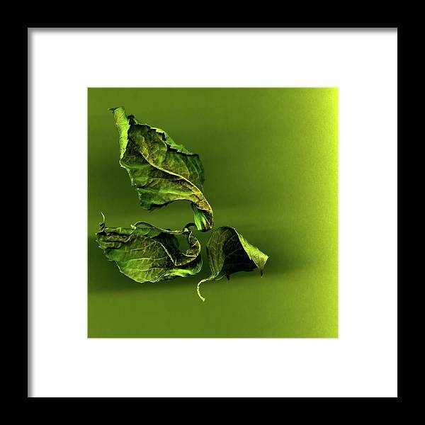 Leaves Framed Print featuring the photograph Leaf Twists by Vita Mancusi