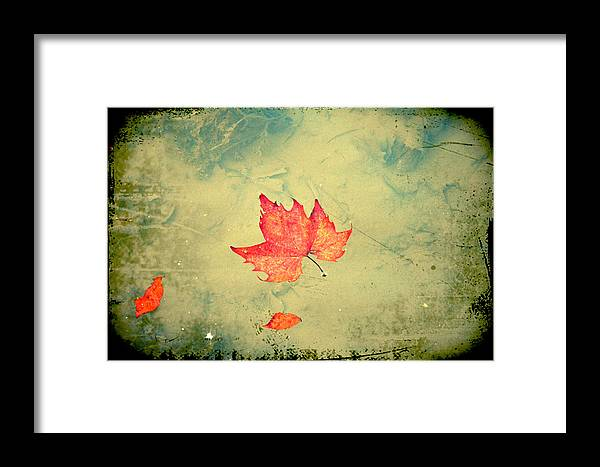 Leaf Framed Print featuring the photograph Leaf Upon The Water by Bill Cannon