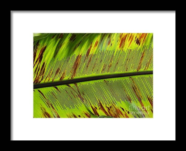 Framed Print featuring the photograph Leaf by Virginia Levasseur
