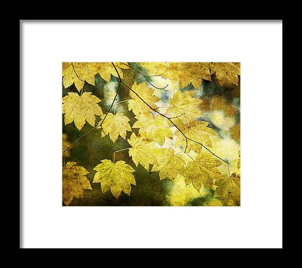 Leaf Framed Print featuring the photograph Leaf Zen T by Rebecca Cozart