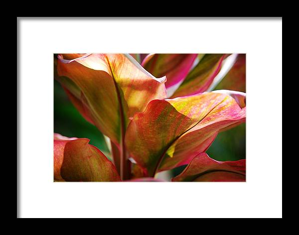 Plants Framed Print featuring the photograph Leafs by Lakida Mcnair