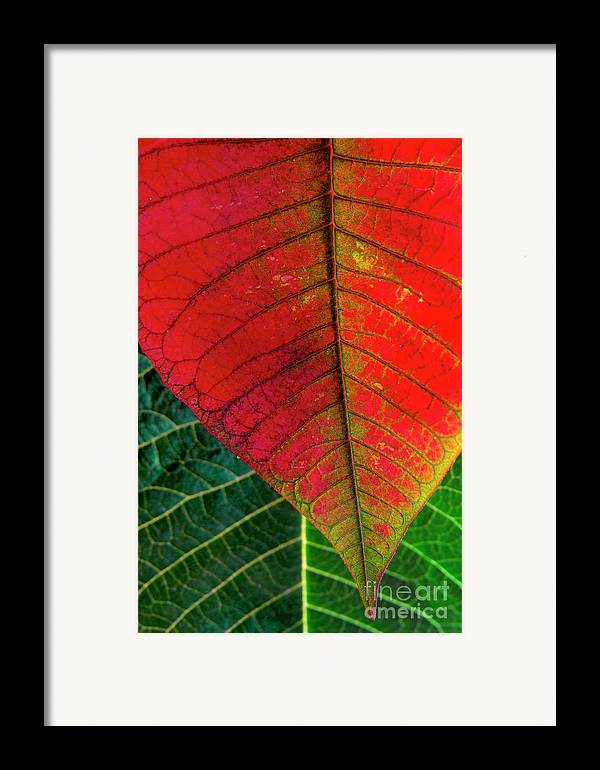 Autumn Framed Print featuring the photograph Leafs Macro by Carlos Caetano