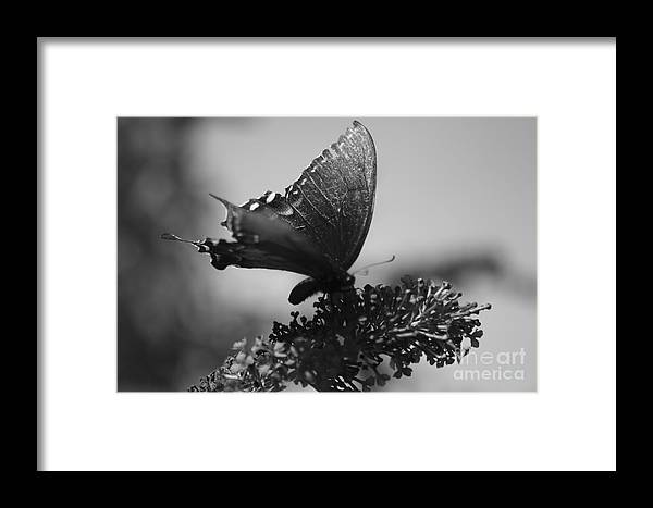 Black And White Framed Print featuring the digital art Learn To Fly 001 by Willow StandingCrow