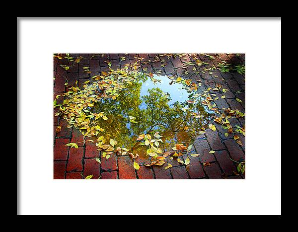 Fall Framed Print featuring the photograph Leaves And A Puddle by Jeremy Lewis
