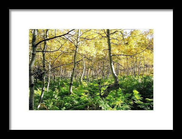 Ferns Framed Print featuring the photograph Leaves And Ferns by Caroline Clark