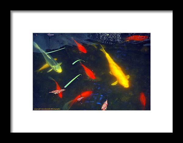 Fish Framed Print featuring the photograph Leaves And Fishes by Mia Alexander