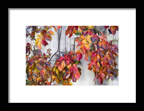 Color Framed Print featuring the photograph Leaves And Vines by Donald Schwartz