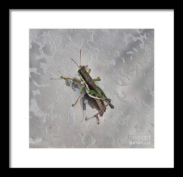 Grasshopper Framed Print featuring the photograph Legs by Kathy Daxon