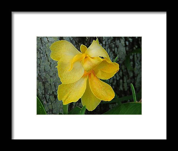 Yellow Framed Print featuring the photograph Lemon Yellow by Judy Waller