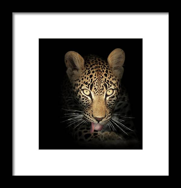 Leopard Framed Print featuring the photograph Leopard In The Dark by Johan Swanepoel