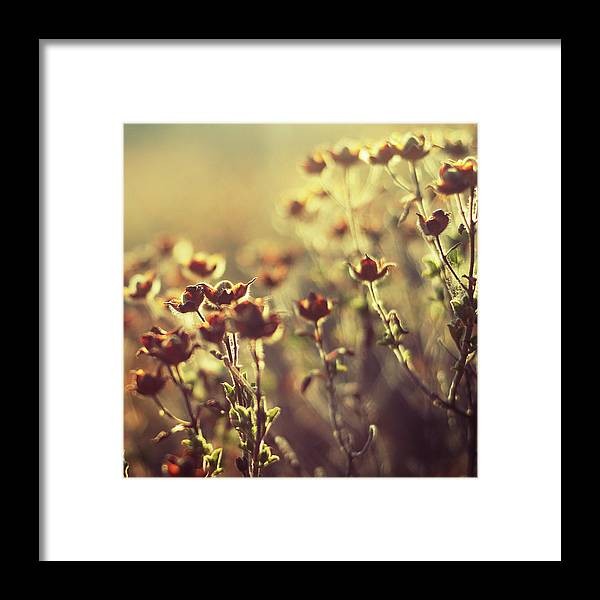 Wild Flowers Framed Print featuring the photograph Les Larmes Dautomne by Zapista
