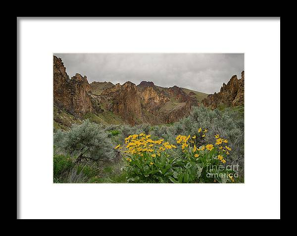 Balsamorhiza Sagittata Framed Print featuring the photograph Leslie Gulch Sunflowers by Idaho Scenic Images Linda Lantzy