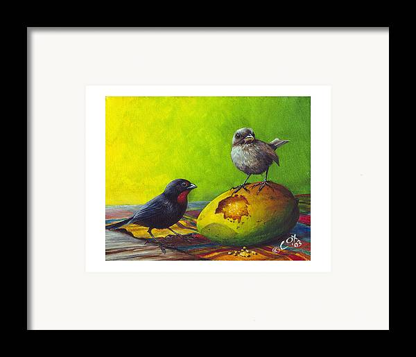 Chris Cox Framed Print featuring the painting Lesser Antillean Bullfinches And Mango by Christopher Cox