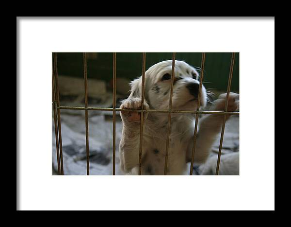 Puppy Framed Print featuring the photograph Let Me Out by Jeff Porter