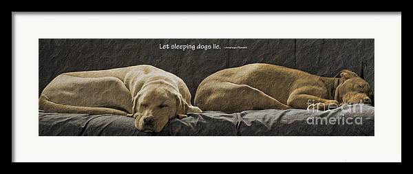 Sleeping Dogs Framed Print featuring the photograph Let Sleeping Dogs Lie by Gwyn Newcombe