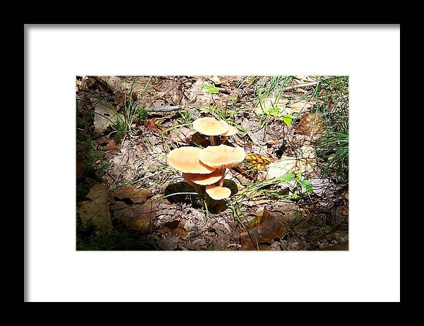 Mushrooms Framed Print featuring the photograph Let The Sunshine In - Photograph by Jackie Mueller-Jones