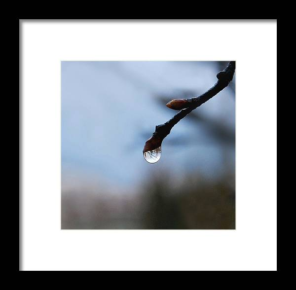 Rain Drop Framed Print featuring the photograph Letting Go by Marilynne Bull