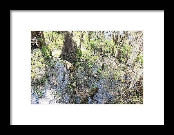 Lettuce Lake Framed Print featuring the photograph Lettuce Lake Swampland by Carol Groenen