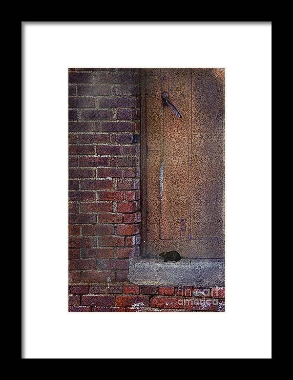 Rat Framed Print featuring the photograph Life Among The Alleyway by The Stone Age