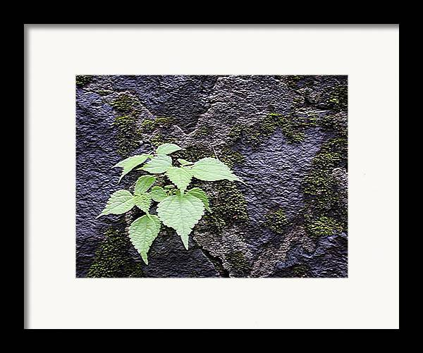 Landscape Framed Print featuring the photograph Life Breaks Through by Curtis Schauer