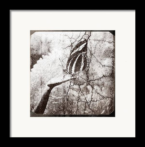 Hand Framed Print featuring the photograph Life In A Hand by Andriy Zolotoiy