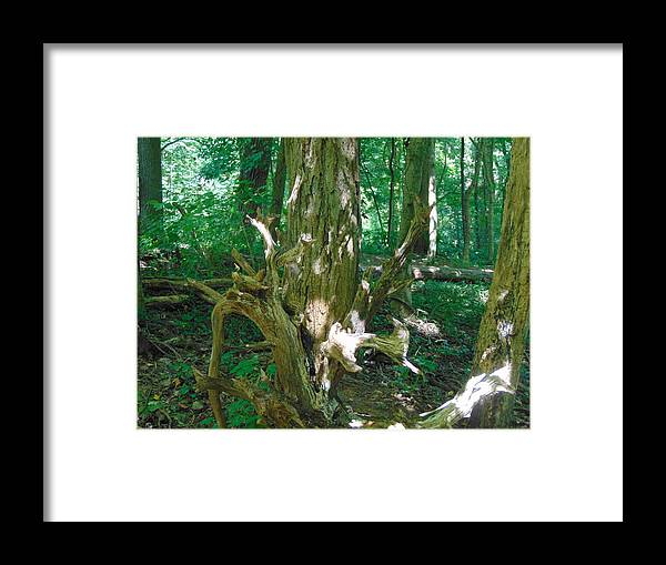 Tree Framed Print featuring the photograph Life by Karla Hoffman