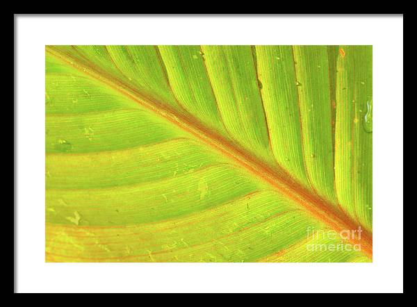 Abstract Framed Print featuring the photograph Life Lines by Steven Dillon